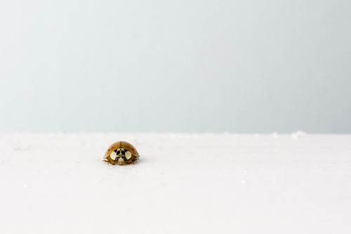 Free photo: Ladybug Beetle Insect Arthropod Bug #48 - 123PhotoFree.com