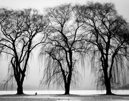 Free photo: Tree Snow Birch Winter Landscape Forest Season #27 - 123PhotoFree.com