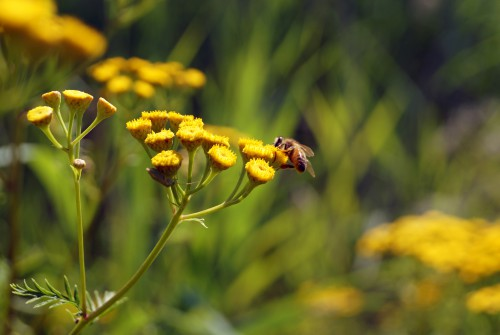 Free photo: Insect Plant Yellow Herb Flower Close Animal Tree Summer #145 - 123PhotoFree.com