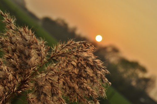 Free photo: Plant Weed Amaranth Herb Organism Cactus Field Sky Natural Landscape #110 - 123PhotoFree.com