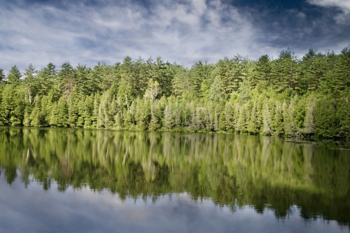 Free photo: Tree Landscape Lake Water River Forest #44 - 123PhotoFree.com