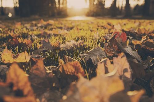 Free photo: Lizard Texture Old Grunge Honeycomb Vintage Rough Aged #60 - 123PhotoFree.com